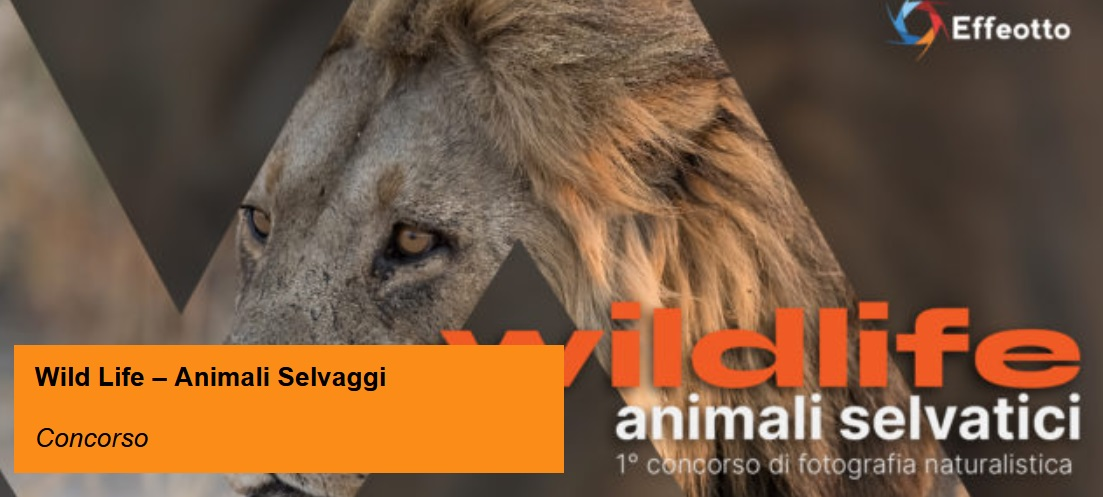 WILDLIFE Animali Selvatici