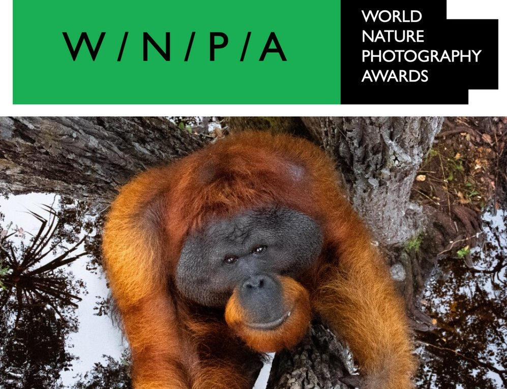 World Nature Photography Awards